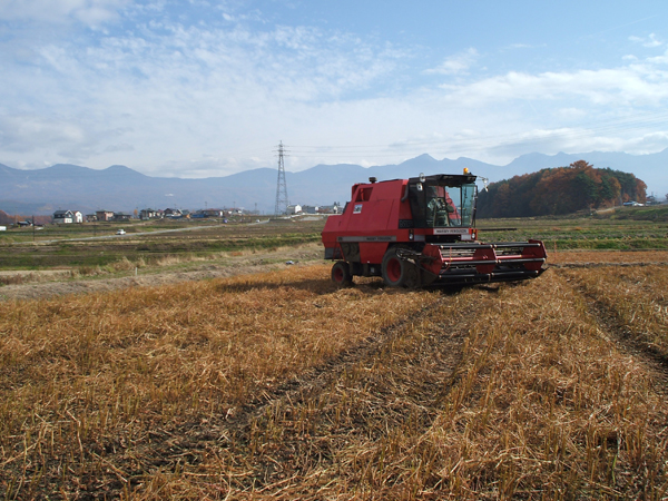 収穫の時期は朝早くからみんな総出です。